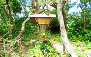 One of the colonized hives in Kur-chok beekeeping group in Aroyo Payam One of the colonized hives in Kur-chok beekeeping group in Aroyo Payam