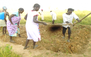 Wardit vegetable group during Training practical's on primary tillage for nursery bed setting in Aweil Center county