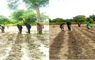 SPEDP Agric extension officer's during row/line planting in Mayom Kuol Demonstration plot Aweil North