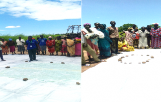 Training of Production groups on harvest and post-harvest handling in Aweil Center County