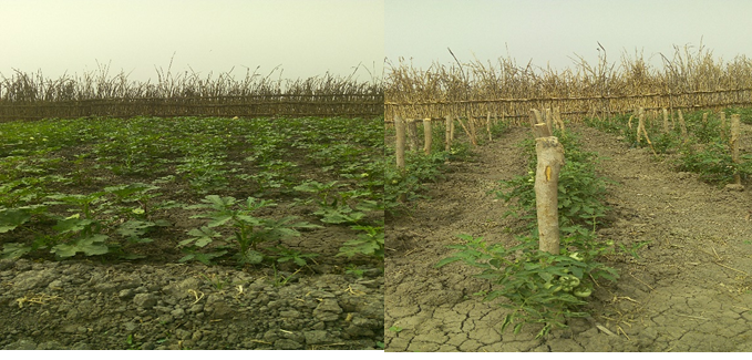 Wardit vegetable field for Okra and Tomato plants in Aweil Center County