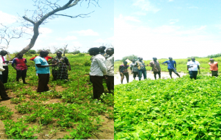 Farmers interacting about groundnuts and Cowpea pests and their control during exchange Visit in Aweil center County